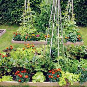 25 Lessons That Will Teach You All You Need To Know About Gardening.