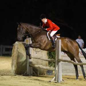 Twelve Awesome Things You Can Learn From Horse Show.
